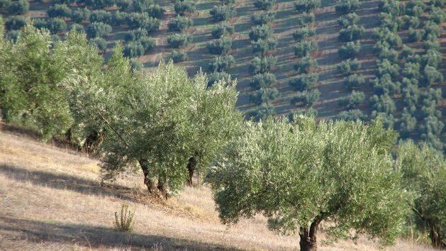 Andalucía autoriza el pago de casi 12 millones a más de 8.100 agricultores en ayudas para zonas con limitaciones naturales