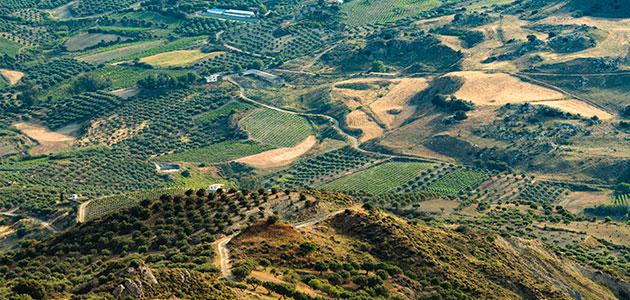 Jaén produce hasta diciembre 144.921 toneladas de aceite, un 40% del aforo previsto, según Asaja