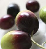 Una tesis doctoral identifica las propiedades del aceite de oliva virgen en función de la maduración de la aceituna