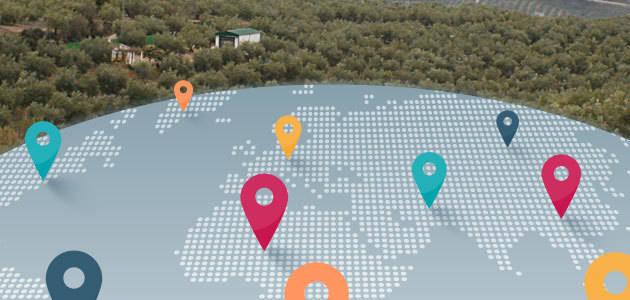 La producción mundial de aceite de oliva aumentará un 8,2% en la campaña 2017/18, según GEA