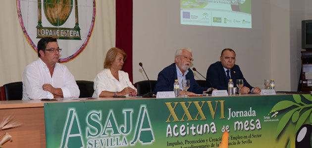 ASAJA-Sevilla estima una producción nacional de aceituna de mesa de 502.000 toneladas verdeables