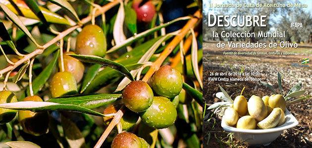 El Ifapa ofrece la II Jornada de Cata de Aceitunas de Mesa procedentes de su Colección Mundial de Variedades de Olivo