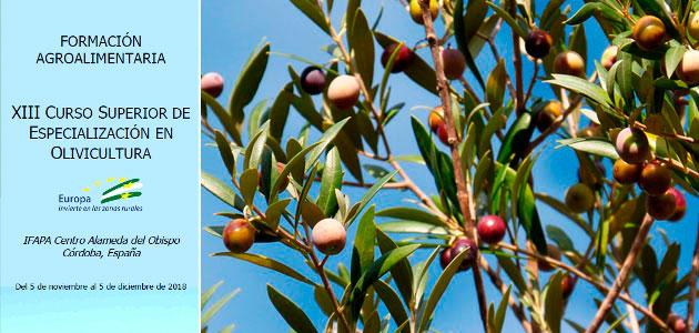 Ifapa lanza la XIII edición del Curso Superior de Especialización en Olivicultura