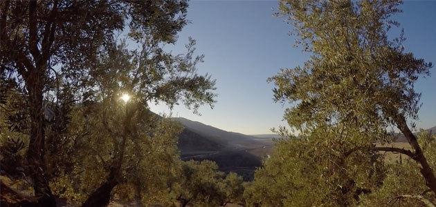 Un documental muestra la realidad social de la olivicultura de Jaén