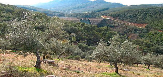 UPA-UCE prevé que la producción de aceite de oliva en Extremadura se sitúe entre 45.000 y 48.000 t.