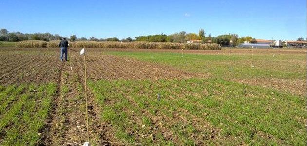 Investigadores demuestran que los cultivos cubierta mejoran la calidad del suelo