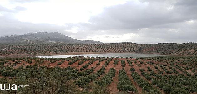 El importante papel que juega el zooplancton en los olivares de Jaén
