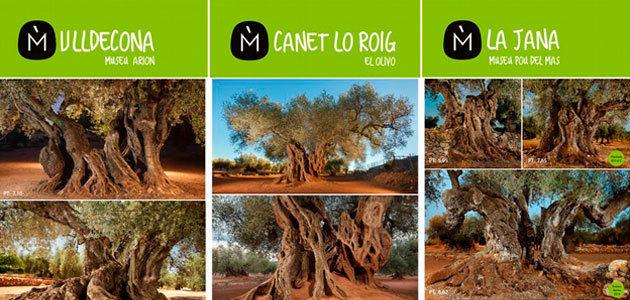 Exposición de los Olivos Milenarios Territorio Sénia