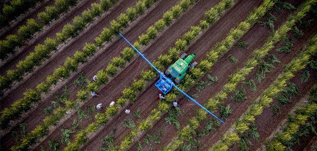Galpagro lidera el proyecto europeo que tratará de prevenir la Xylella fastidiosa en olivar