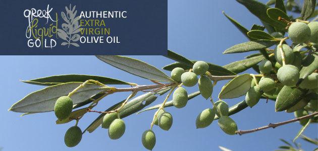 Greek Liquid Gold, dos años poniendo en valor el AOVE griego