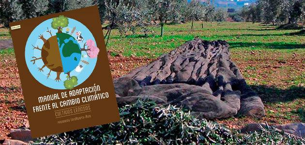 El olivar, abocado a adaptarse al cambio climático