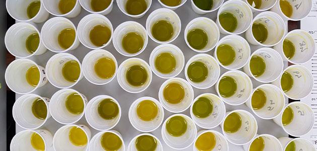 Parqueoliva Serie Oro, reconocido por Monocultivar Olive Oil como 'Best of the World'
