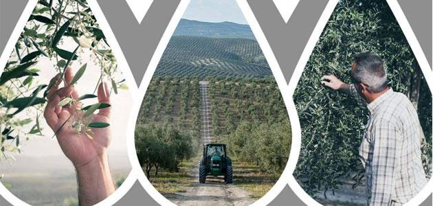 Precios, innovación y amenazas centrarán el III Encuentro de Olivicultores del Grupo Oleícola Jaén