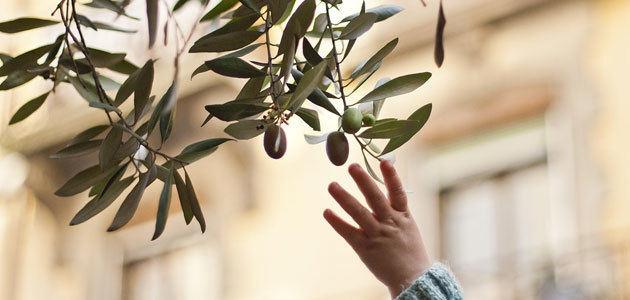 La acelerada banalización del producto pone en peligro el sector del aceite de oliva en España