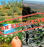 Campaña olivícola 2015/16: 'La Cuenca Mediterránea respira optimismo'