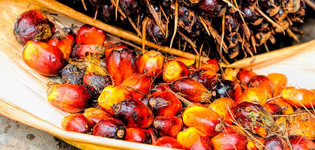 El aceite de palma y la depresión
