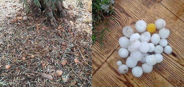 El olivar, entre los cultivos dañados por el pedrisco en Valencia