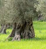 El Gobierno destina 243.000 euros para el fomento de la producción ecológica