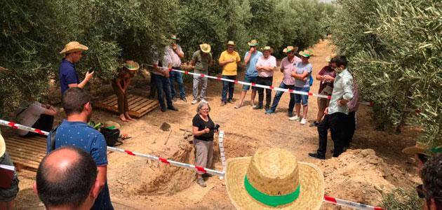 """El proyecto """"SaviaOlivar"""" desarrollará una innovadora técnica para ajustar la dosis precisa de fertilizantes"""