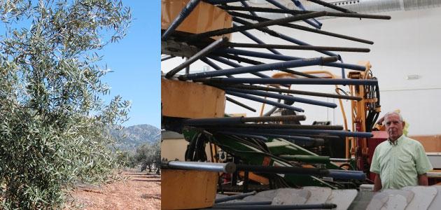 Una nueva cosechadora para mejorar la rentabilidad del olivar tradicional