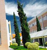 La UJA imparte un curso de especialización en Producción Integrada y sostenibilidad en el olivar