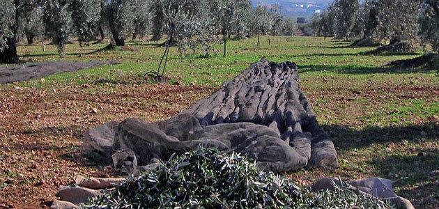 La UNIA lanza un nuevo curso sobre experto en gestión de subproductos del olivar