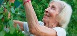 El AOVE, clave en la nutrición de las personas mayores