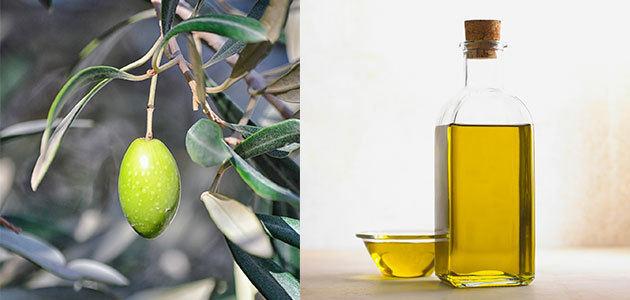 Indicar la campaña de cosecha en las etiquetas de los aceites de oliva podría ser obligatorio
