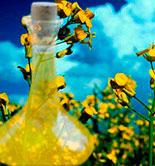 Un estudio apunta que el aceite de colza no puede sustituir al AOVE en la Dieta Mediterránea