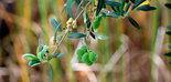 Jaén produjo más de 541.000 toneladas de aceite de oliva hasta enero