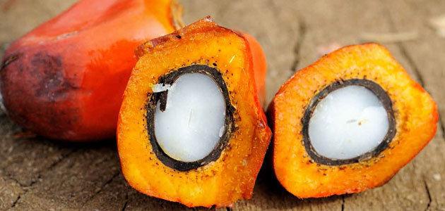 El 10,3% del aceite de palma que entra en España se utiliza para alimentación
