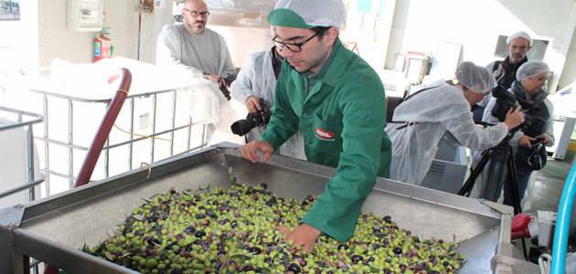 Aceites Abril prevé superar este año los 10.000 kg. de aceituna para la elaboración de su aceite 100% gallego