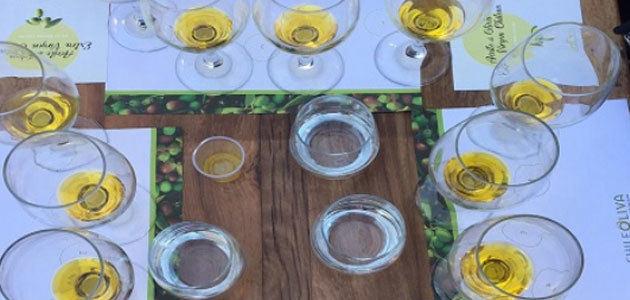 EEUU, Brasil y Canadá, principales destinos del aceite de oliva chileno en 2018