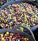 COAG pide mecanismos de estabilización de precios y garantía de renta para los olivareros