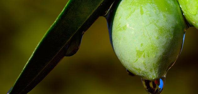 El incremento de las exportaciones de aceite de oliva esta campaña favorecería un cambio de tendencia en los precios