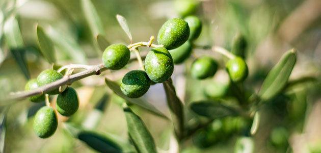 La producción europea de aceite de oliva se sitúa en 2,25 millones de t. hasta abril