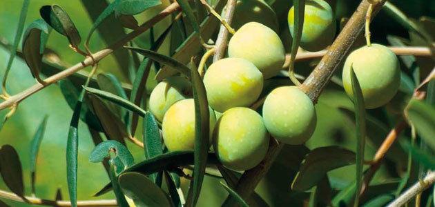 El Gobierno actualiza la normativa sobre comercialización de los fertilizantes en la UE