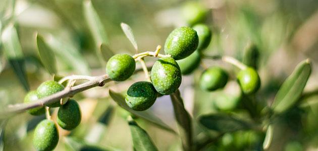 Mercado firme al confirmarse las existencias de aceite de oliva en 893.673 t. a 31 de marzo