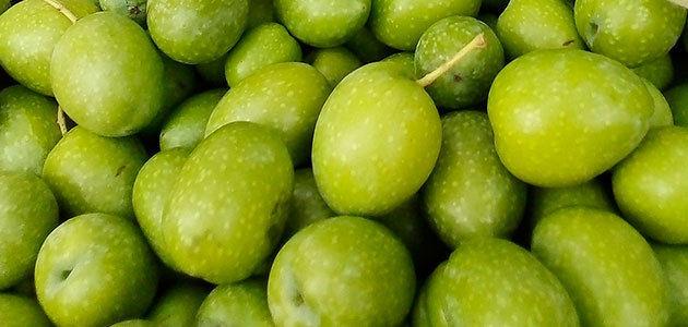 UPA-Andalucía prevé una menor producción de aceituna de mesa en la próxima campaña