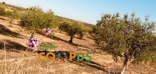 Nace AgriCOOPDS, una nueva iniciativa para promover el cooperativismo agrario