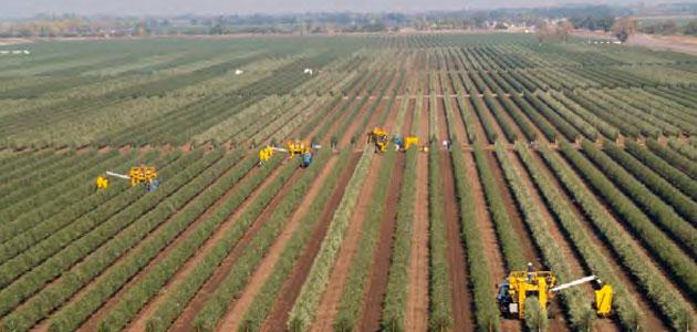 Córdoba acogerá en junio el I Simposio Internacional de Olivicultura en Seto Olint