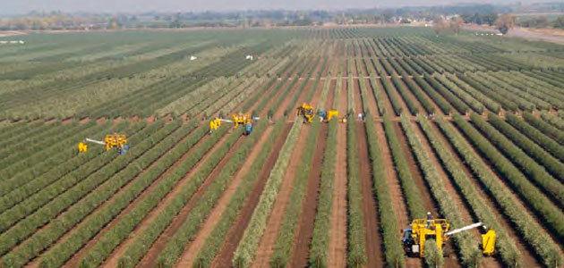La UCO acogerá el I Curso Olint de Moderna Olivicultura