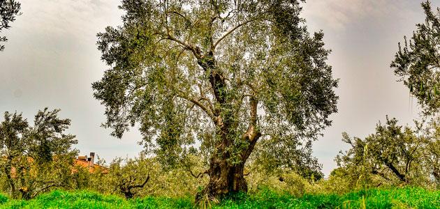 Life Agromitiga o cómo paliar los efectos del cambio climático en la agricultura