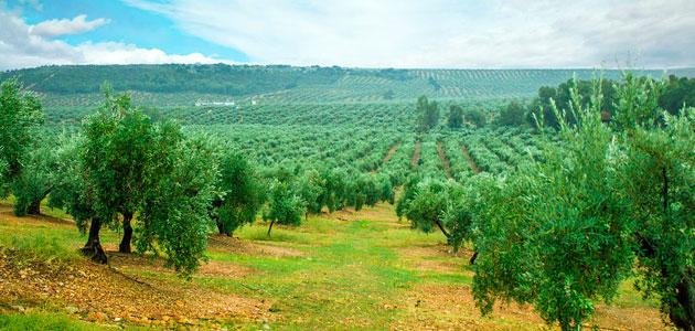 AGROS o cómo mejorar el conocimiento e innovación en agricultura sostenible