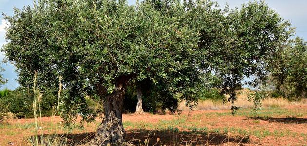 Andalucía respalda la contratación de seguros agrarios con ayudas de 10,5 millones de euros