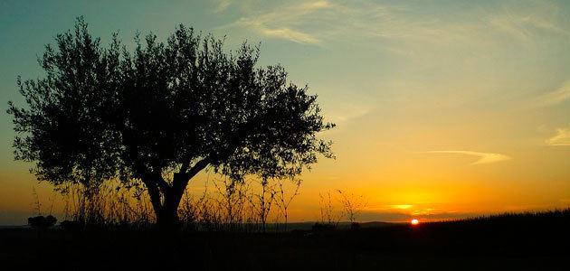 La producción de aceituna en Portugal caerá un 20% esta campaña