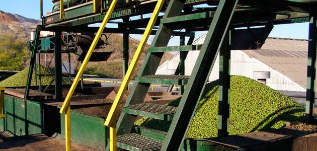 Almazaras Federadas destaca que los olivareros han mejorado más de un 45% el precio de liquidación
