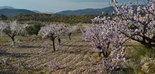 Cosechas, sostenibilidad y salud: apuestas del sector de la almendra y la avellana