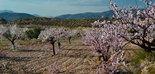 La almendricultura como alternativa y complemento a la olivicultura, a debate en un diálogo on line