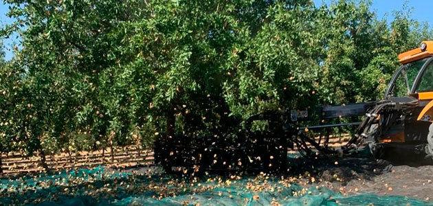Comienza la recolección del almendro en la provincia de Córdoba
